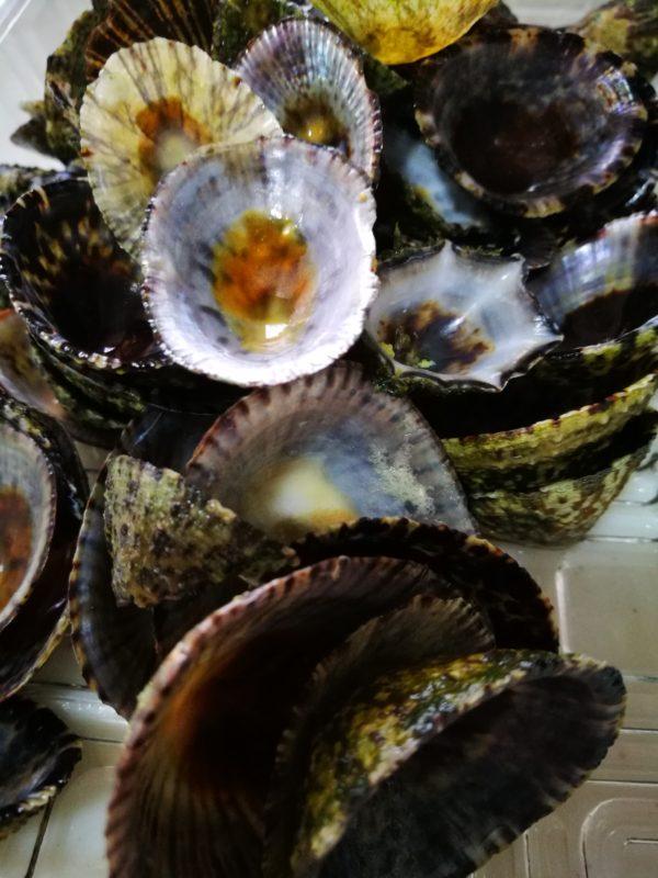 火が通ると、マツバガイとウノアシの貝殻が勝手に外れます